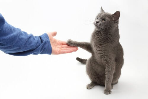 고양이에게 악수를 가르치는 것이 가능할까?