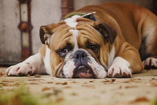 개가 싫어하는 주인의 행동 7가지
