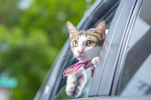 고양이가 차에 2