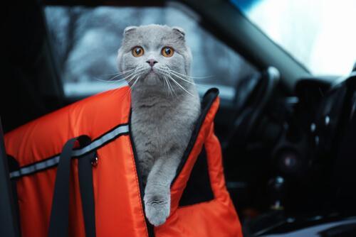 고양이가 차에 3