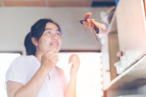 바퀴벌레가 날아다니는 이유