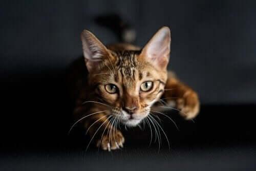 사냥은 고양이의 본능인가, 학습인가?