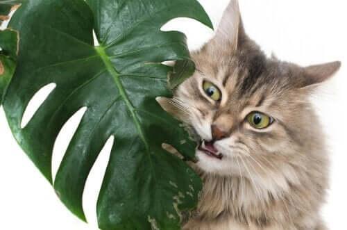 반려동물에게 가장 유해한 식물