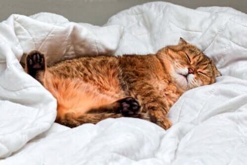 고양이의 수면: 고양이도 꿈을 꿀까?