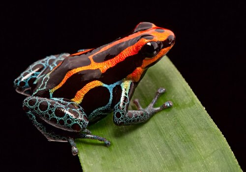 동물 세계에서 볼 수 있는 생존법, 경계색