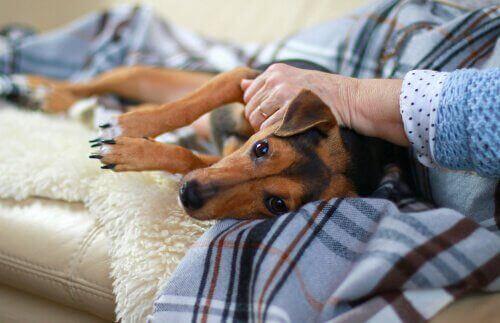 개 홍역의 증상, 치료 그리고 원인