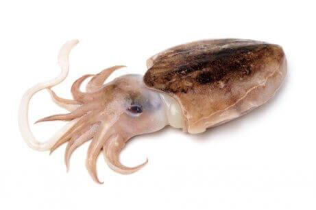 오징어의 갑오징어 뼈