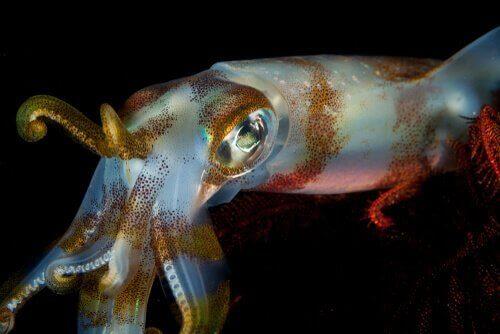 갑오징어는 오징어와 어떤 점이 다를까?