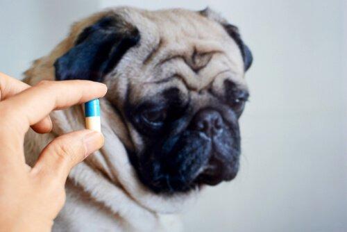 반려동물에게 항생제를 급여해도 괜찮을까?
