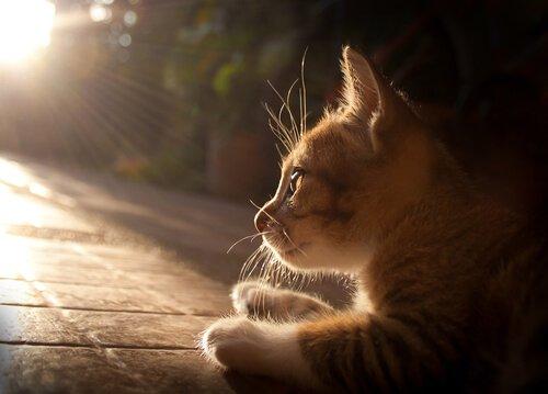 고양이의 에이즈 질환에 관한 모든 것