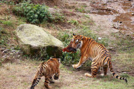멸종 직전 상태인 동물 5종