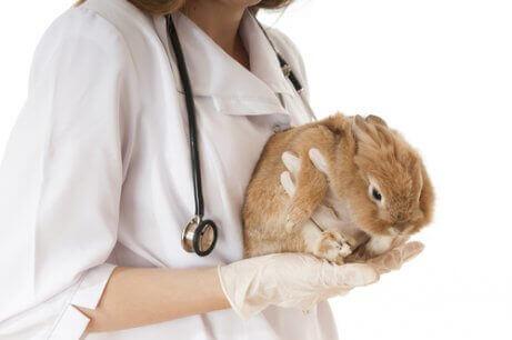 토끼의 벼룩을 제거하는 방법