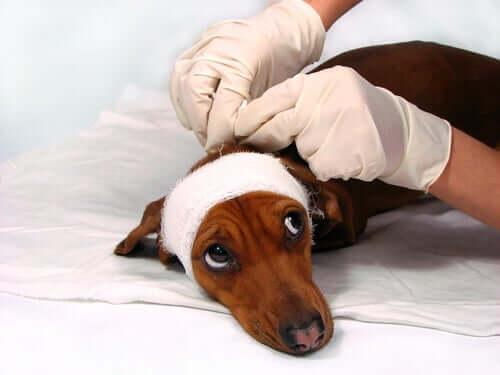 동물병원에서의 학대는 어떻게 대응할까?