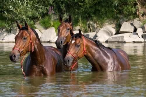 말 여름나기