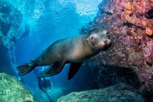 바다사자 동물의 왕국 최고의 수영 선수들