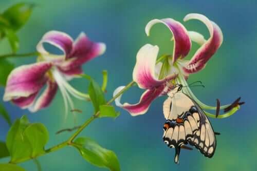 제비꼬리 나비