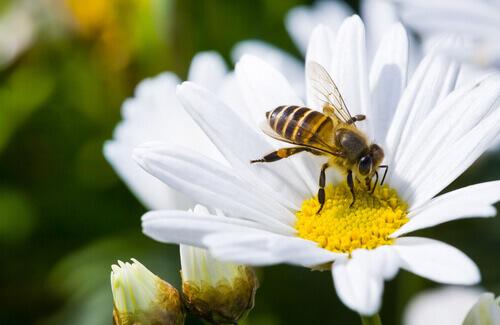 벌이 없다면 지구상 모든 생명은 사라질지도 모른다