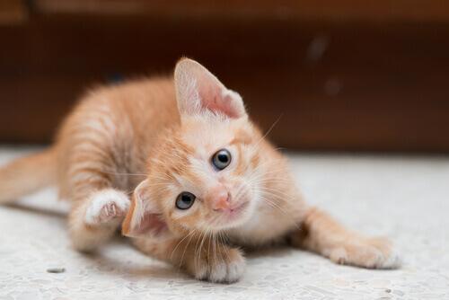 고양이의 눈 질병을 예방하고 관리하는 방법