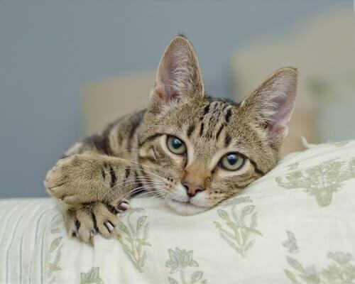 고양이는 위협적인 발톱을 언제 사용할까?