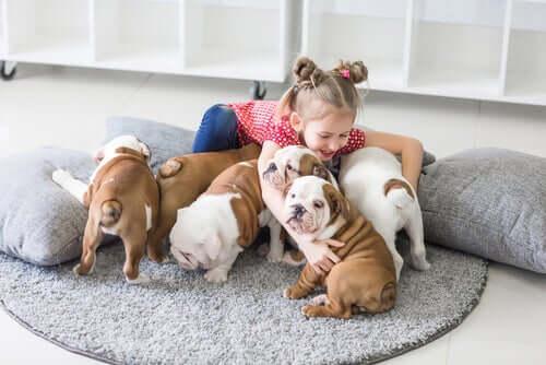 법적으로 얼마나 많은 동물을 집에서 키울 수 있을까?
