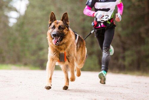 개를 위한 스포츠, 캐니크로스는 무엇일까?