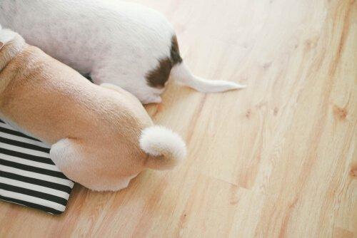 개가 꼬리로 소통하는 방법