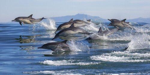 돌고래의 행동은 거의 인간과 같다?
