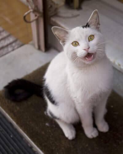 고양이 울음의2