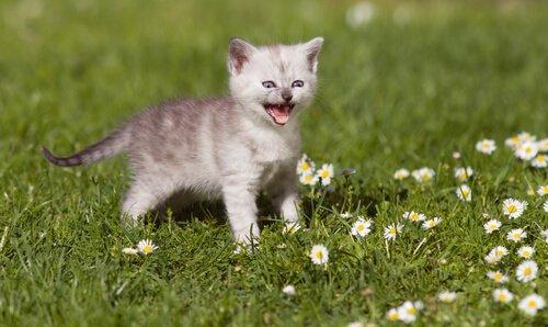 고양이 울음에 관한 모든 것