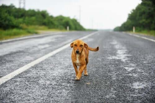 반려동물 교통사고 배상 조건