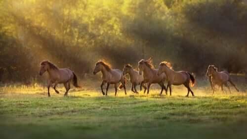 말의 소통 방식