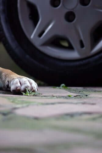 반려동물이 교통사고를 당했을 때 배상 요구