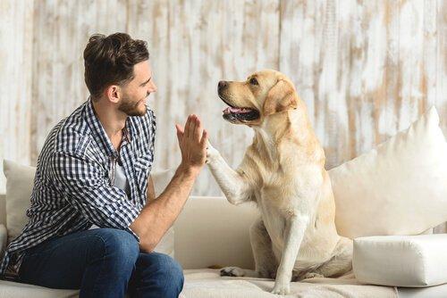 혼자 사는 사람들이 동물을 입양하면 좋은 점