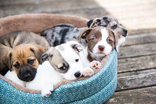 새끼 강아지를 키우는 데 도움이 되는 6가지 방법