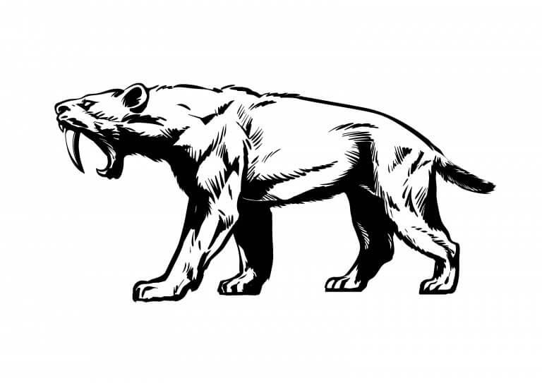 멸종된 야생 고양이 5종