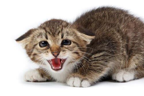 고양이가 가르랑거리는3