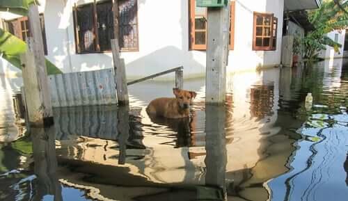 홍수가 났을 때 반려동물을 돌보는 방법