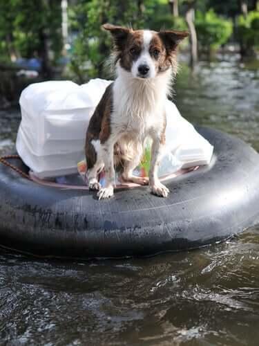 홍수 시 반려동물 돌보기