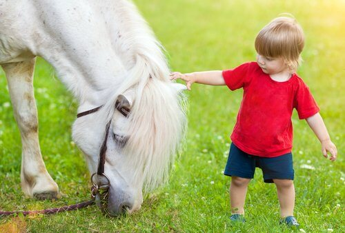말의 얼굴 표정과 그 의미