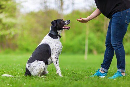 응용심리학은 개를 훈련할 때에도 유용하다