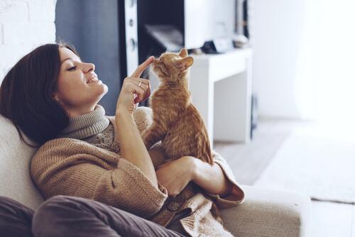 고양이와 사이좋게 지내는 데 도움이 되는 방법
