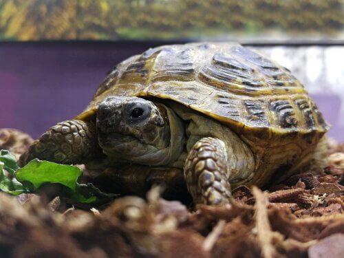 거북을 위한 테라리움 꾸미기