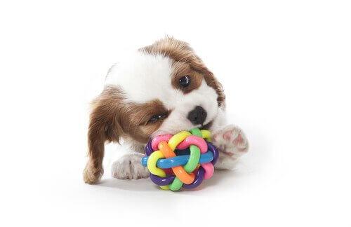 반려견이 씹을 수 있는 장난감을 찾는 방법 4가지