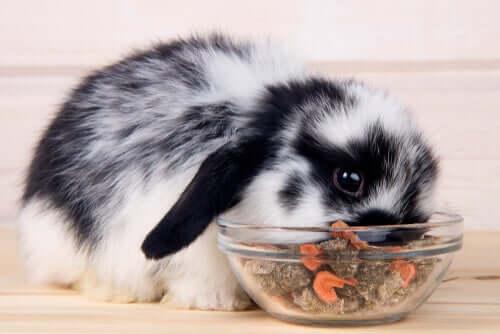 드워프 토끼 과일