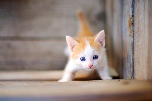 새끼 고양이를 돌보는 몇 가지 팁