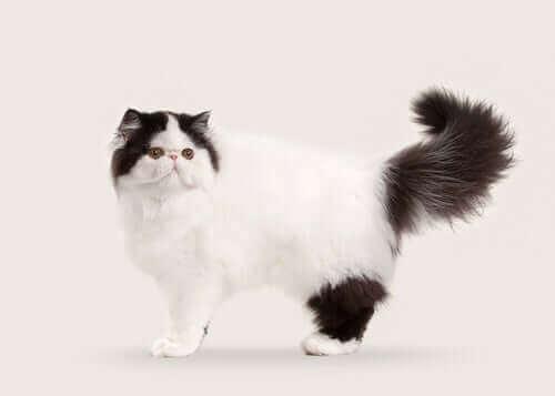 중장모 고양이와 장모 고양이 10종