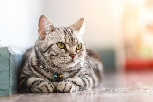 4. 고양이 칼리시바이러스