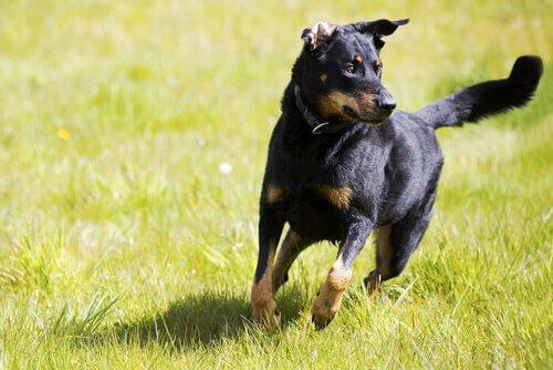 독립적인 개를 훈련하는 팁