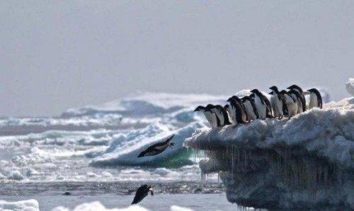 남극 대륙에 있는 거대한 펭귄 묘지