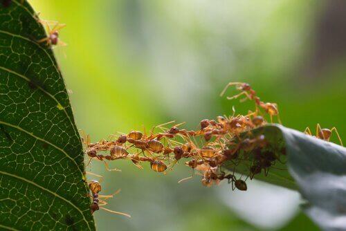 개미 다리
